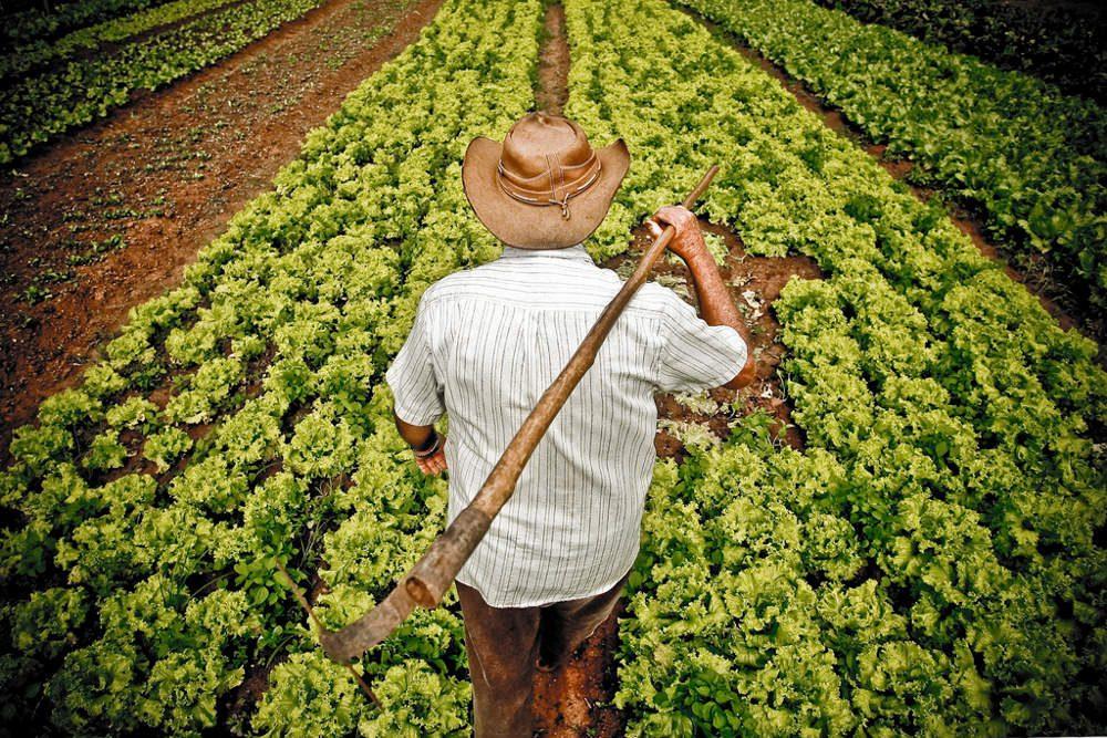 Mensagem do presidente em alusão ao Dia do Agricultor